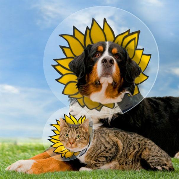 funny-pet-cones-creative-elizabethan-collars-12