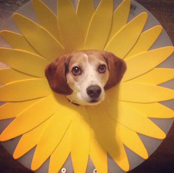 funny-pet-cones-creative-elizabethan-collars-6