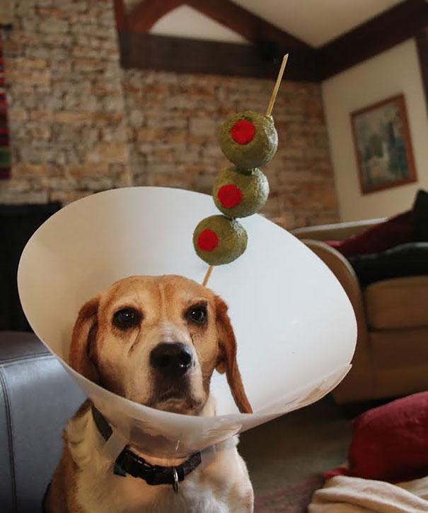funny-pet-cones-creative-elizabethan-collars-7