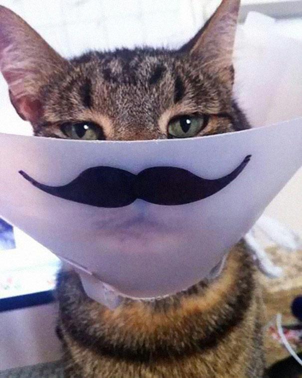 funny-pet-cones-creative-elizabethan-collars-9