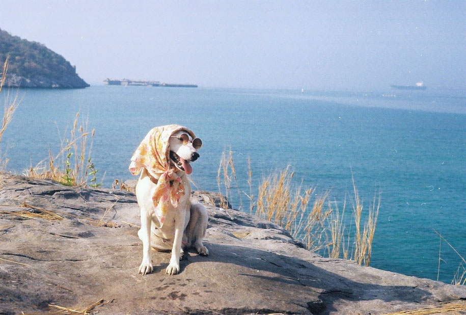 happy-dog-photography-gluta-thailand-11
