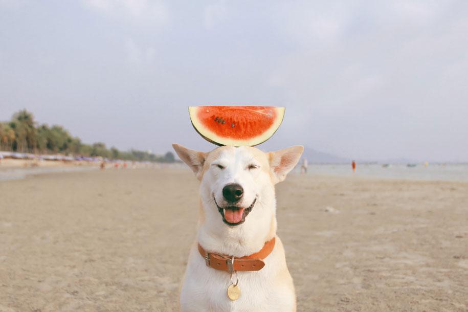 happy-dog-photography-gluta-thailand-14