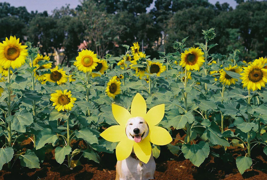 happy-dog-photography-gluta-thailand-2