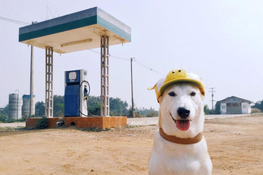 happy-dog-photography-gluta-thailand-22