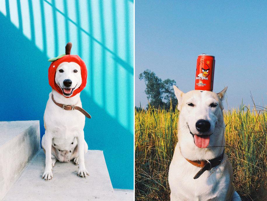 happy-dog-photography-gluta-thailand-26