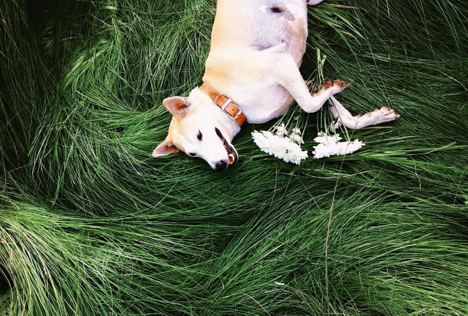 happy-dog-photography-gluta-thailand-3