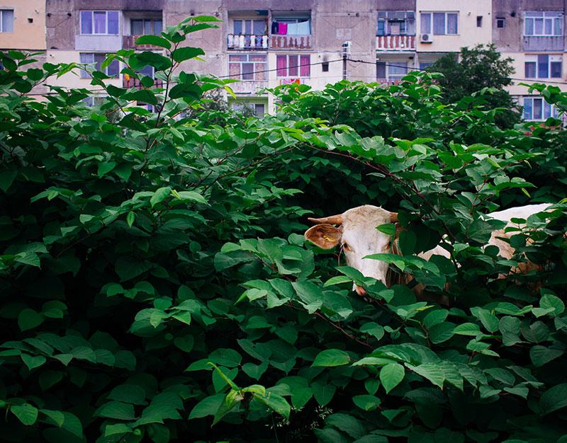 romania-villages-quirky-photography-hajdu-tamas-1