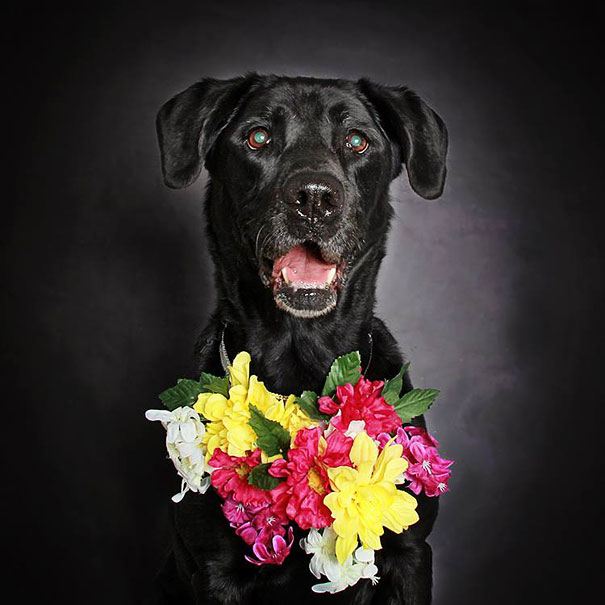 adoption-dog-black-portraits-guinnevere-shuster-1