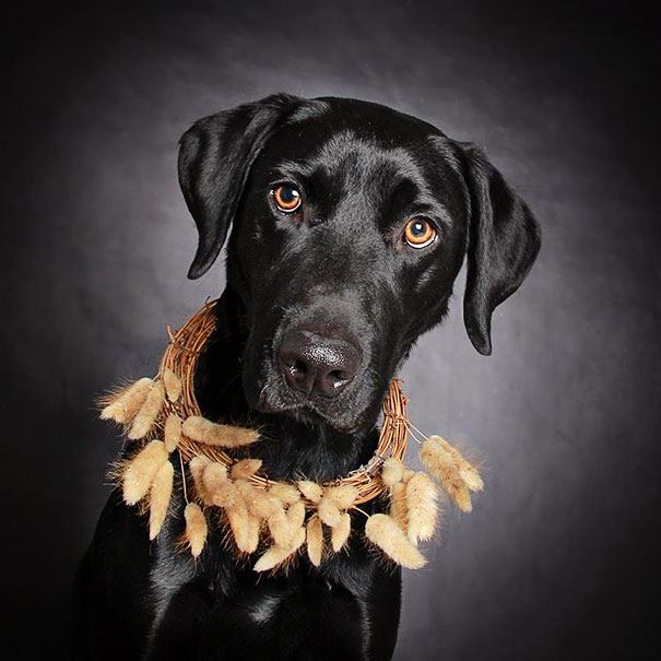adoption-dog-black-portraits-guinnevere-shuster-2