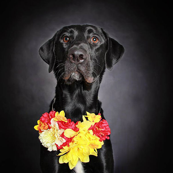 adoption-dog-black-portraits-guinnevere-shuster-4