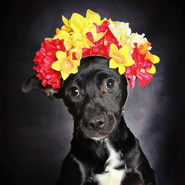 adoption-dog-black-portraits-guinnevere-shuster-5