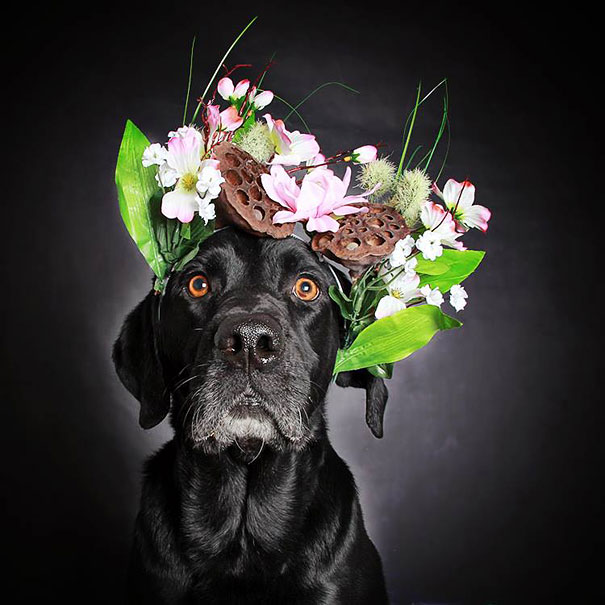 adoption-dog-black-portraits-guinnevere-shuster-6