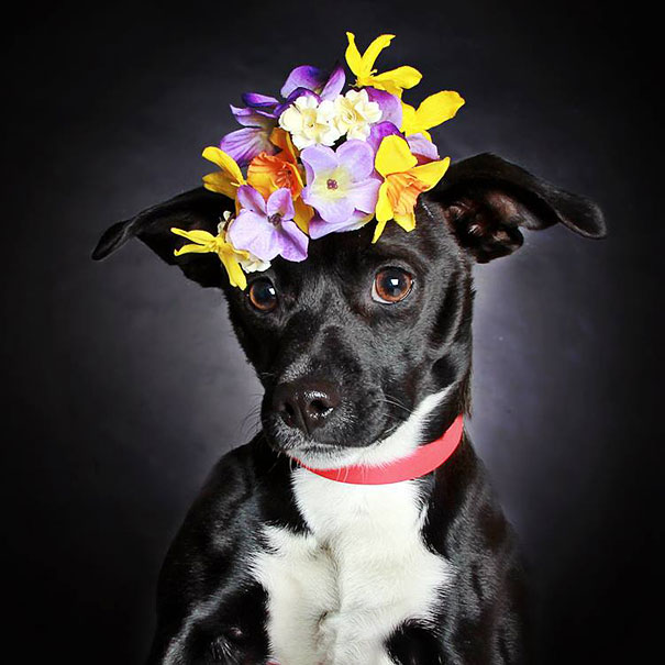 adoption-dog-black-portraits-guinnevere-shuster-7