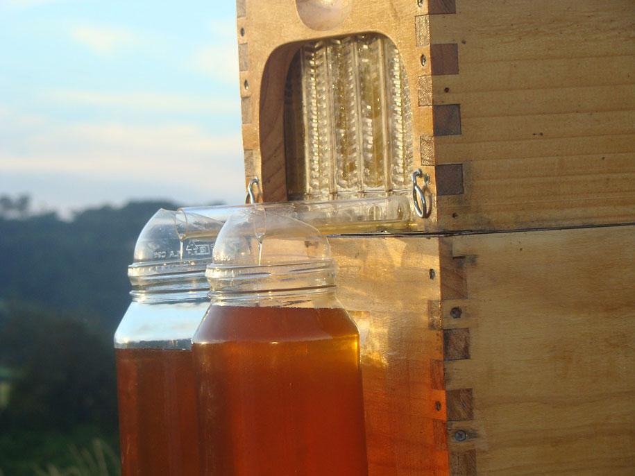 bees-easy-honey-tap-flow-hive-stuart-cedar-anderson-2