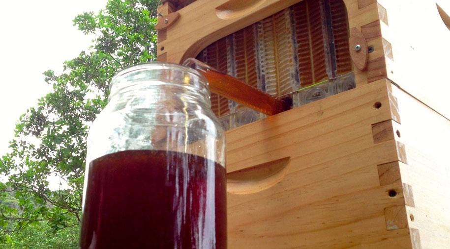 bees-easy-honey-tap-flow-hive-stuart-cedar-anderson-5