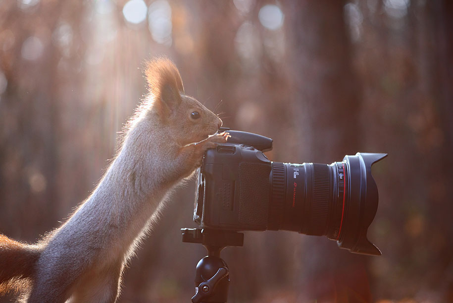 macro-photography-squirrel-vadim-trunov-russia-4