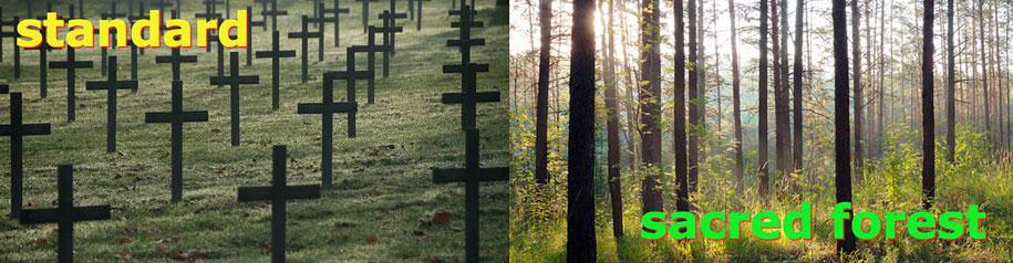 sacred-memory-forest-biodegradable-burial-pod-capsula-mundi-6-1