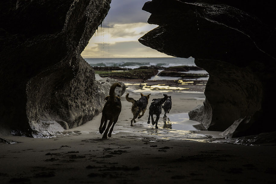 working-dog-animals-shepherds-realm-andrew-fladeboe-15