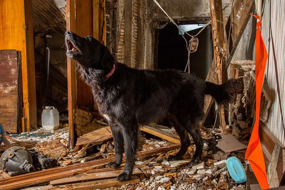 working-dog-animals-shepherds-realm-andrew-fladeboe-23