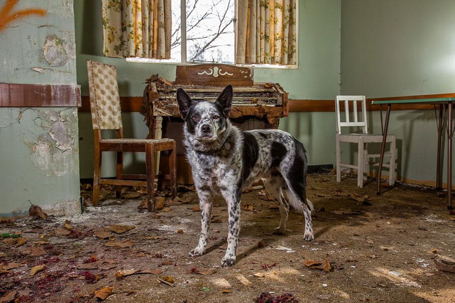 working-dog-animals-shepherds-realm-andrew-fladeboe-24