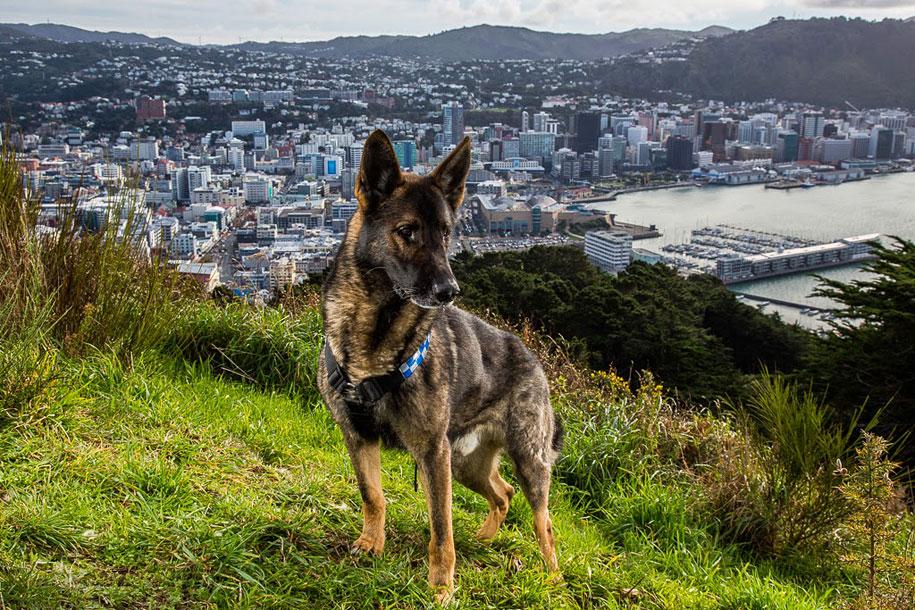 working-dog-animals-shepherds-realm-andrew-fladeboe-27