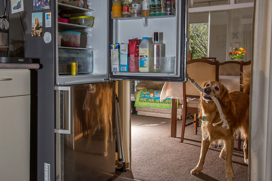working-dog-animals-shepherds-realm-andrew-fladeboe-32