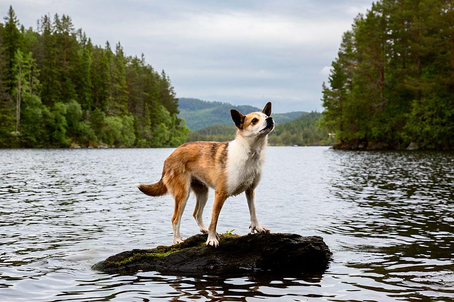 working-dog-animals-shepherds-realm-andrew-fladeboe-6