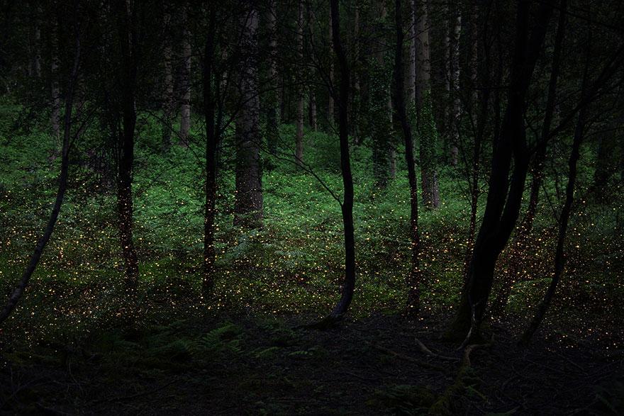 fairy-tale-photograhy-ellie-davis-22
