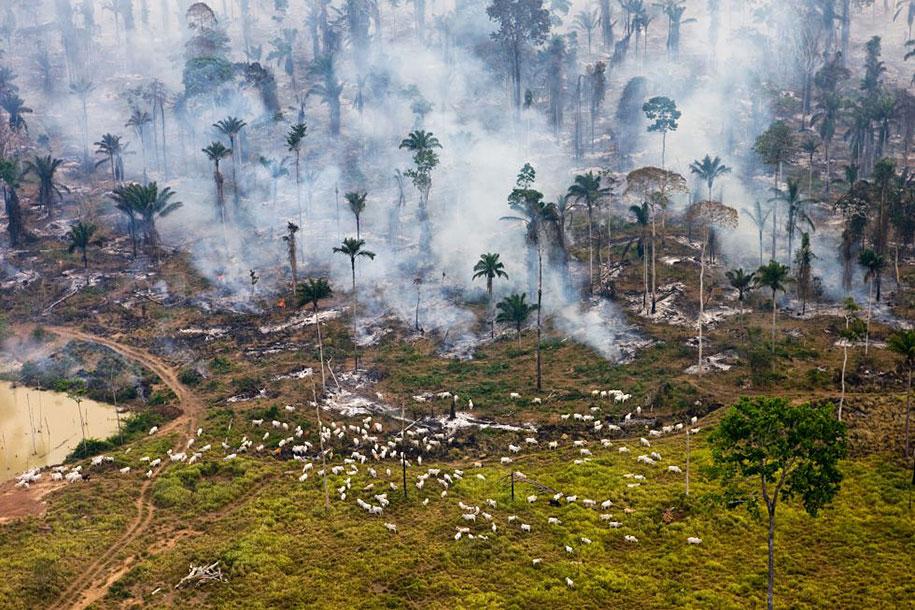 pollution-trash-destruction-overdevelopement-overpopulation-overshoot-10