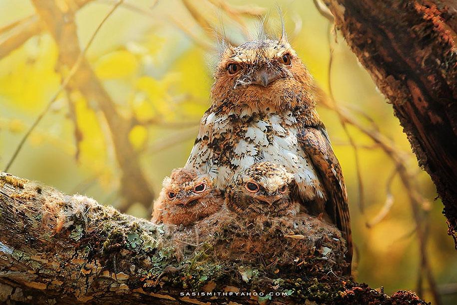 owl-photography-sasi-smit-9