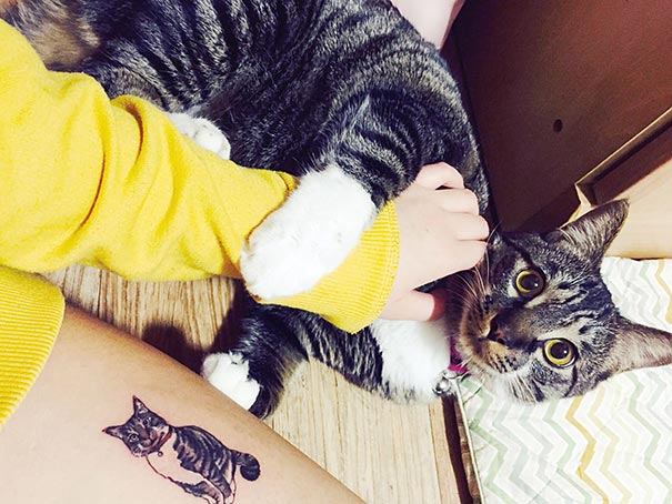 cat-tattoos-trend-illegal-parlors-south-korea-1