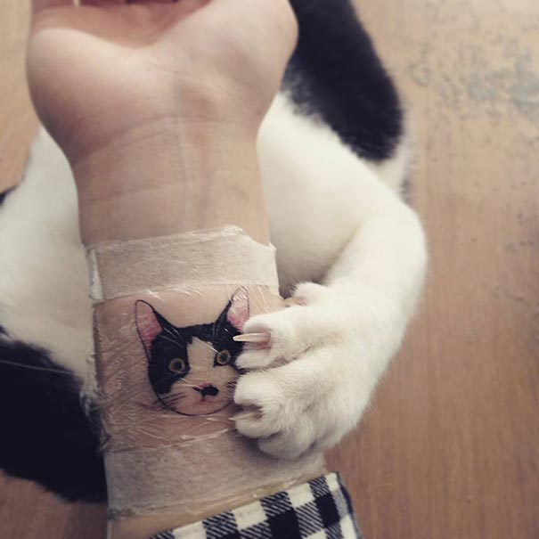 cat-tattoos-trend-illegal-parlors-south-korea-9