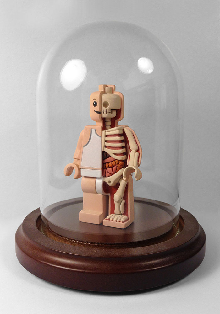children-cartoon-toy-anatomy-bones-insides-jason-freeny-9