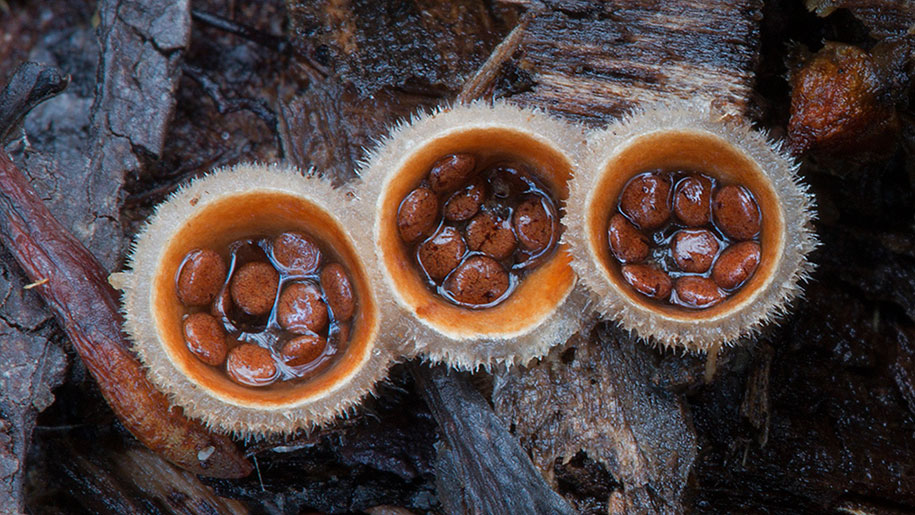 exotic-australian-mushroom-photography-steve-axford-44