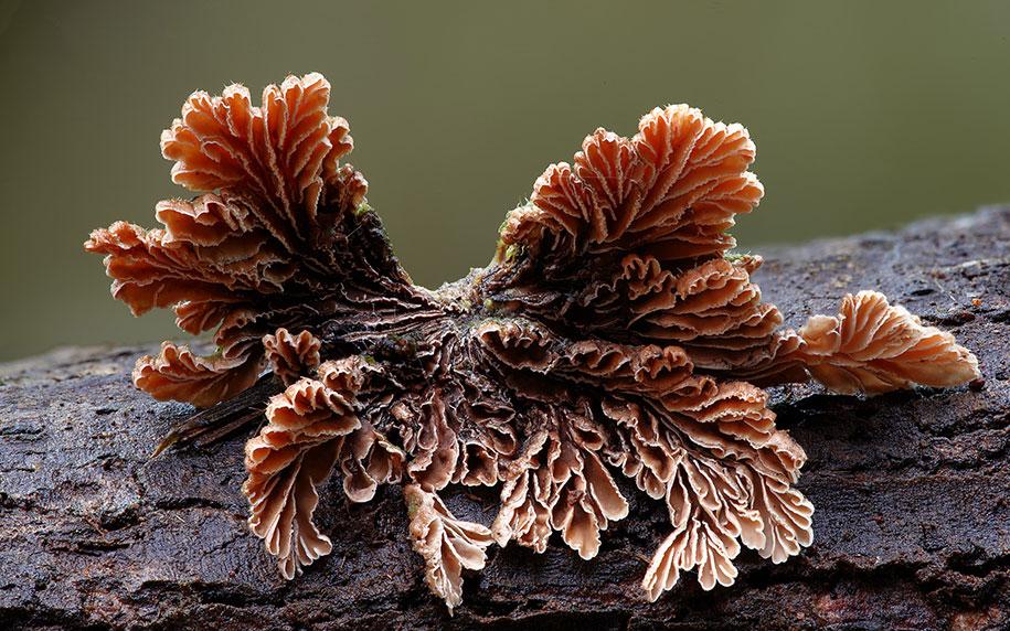 exotic-australian-mushroom-photography-steve-axford-61