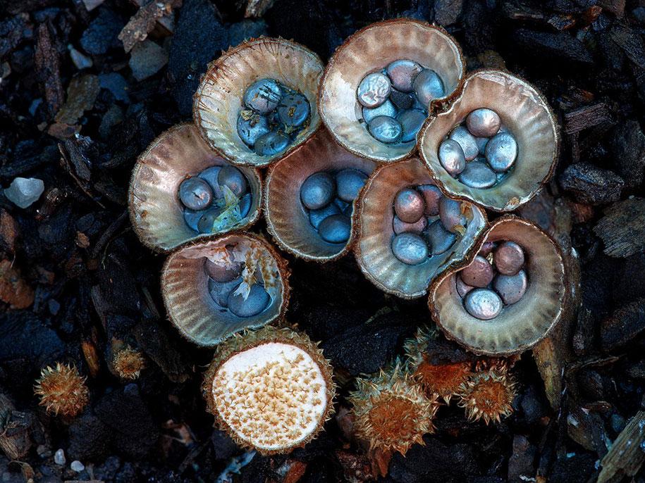 exotic-australian-mushroom-photography-steve-axford-69