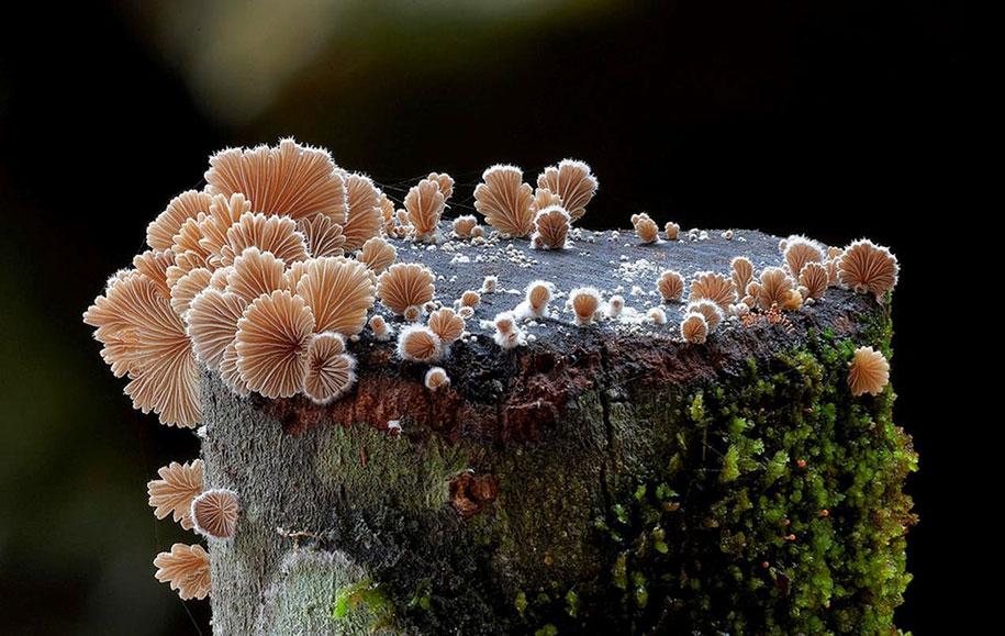 exotic-australian-mushroom-photography-steve-axford-71