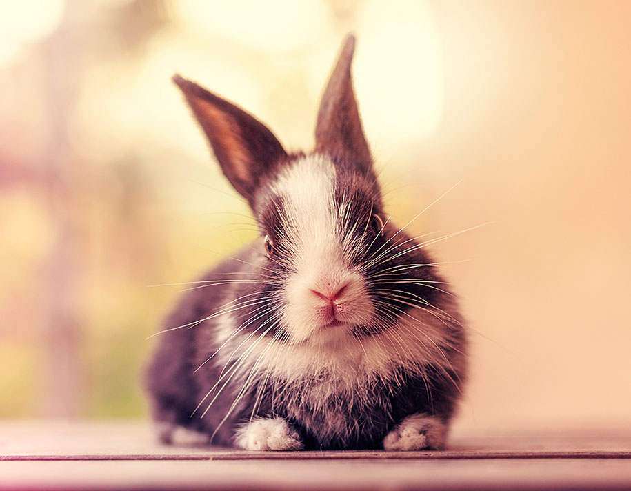 cute-bunny-baby-growing-up-ashraful-arefin-11