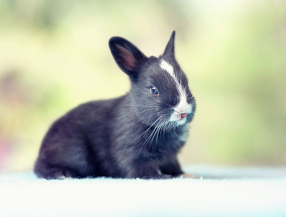 cute-bunny-baby-growing-up-ashraful-arefin-14