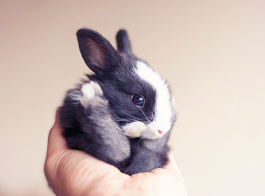 cute-bunny-baby-growing-up-ashraful-arefin-5
