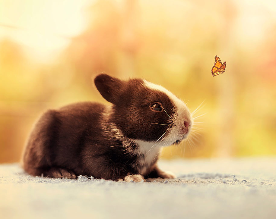cute-bunny-baby-growing-up-ashraful-arefin-7