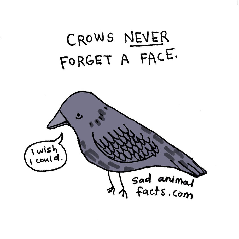 cute-illustrations-drawings-sad-animal-facts-brooke-barker-2