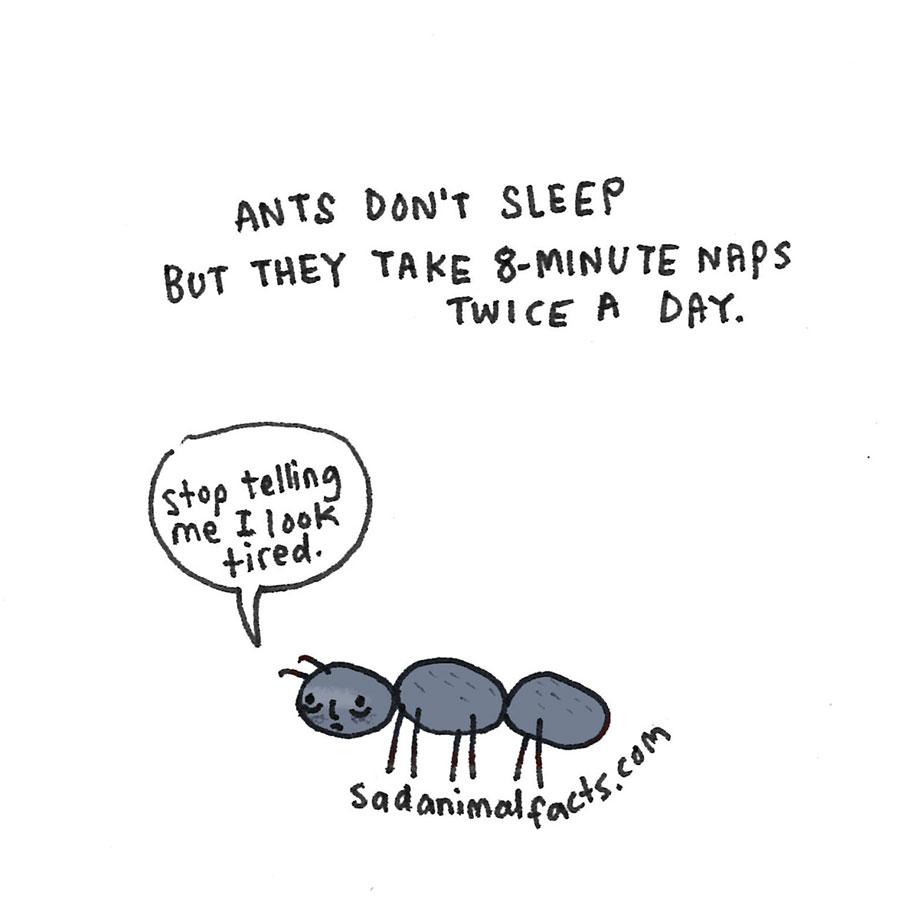 cute-illustrations-drawings-sad-animal-facts-brooke-barker-21