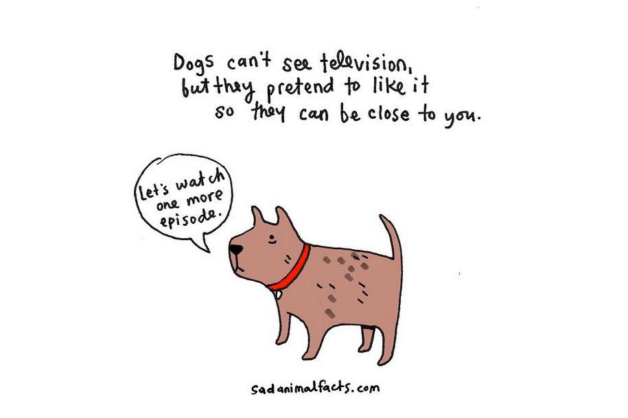 cute-illustrations-drawings-sad-animal-facts-brooke-barker-35
