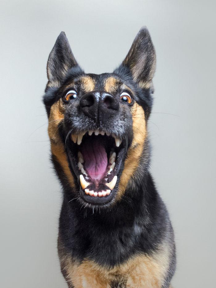 funny-playful-expressive-dog-portraits-elke-vogelsang-1