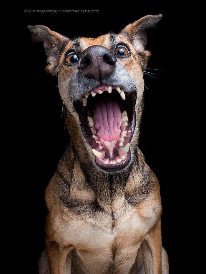 funny-playful-expressive-dog-portraits-elke-vogelsang-11