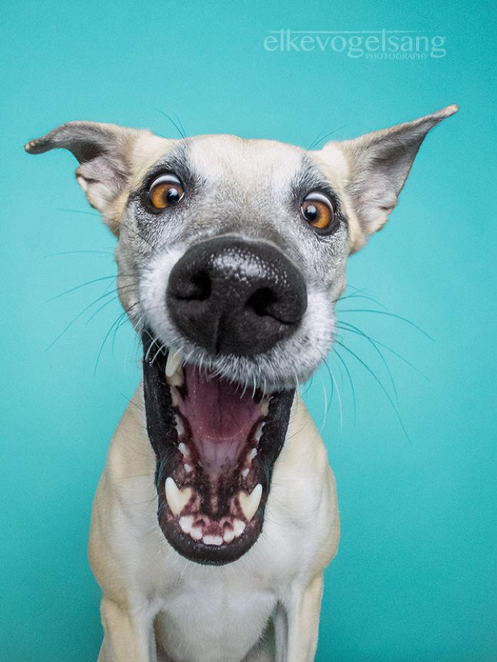 funny-playful-expressive-dog-portraits-elke-vogelsang-14