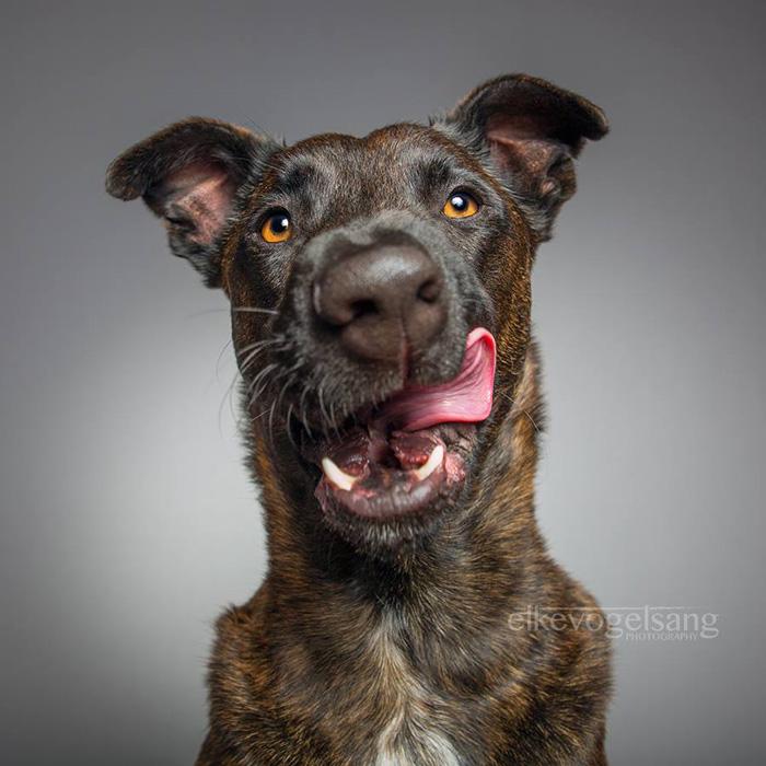 funny-playful-expressive-dog-portraits-elke-vogelsang-3