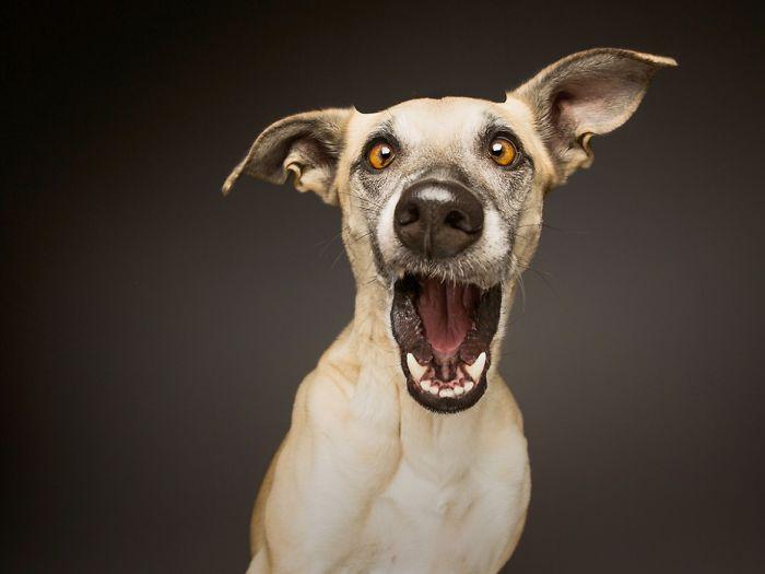 funny-playful-expressive-dog-portraits-elke-vogelsang-5