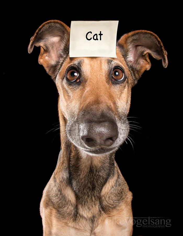 funny-playful-expressive-dog-portraits-elke-vogelsang-6